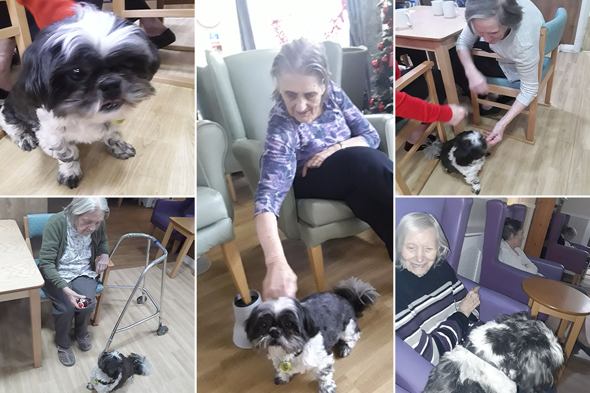 Rocco brings smiles to Sonya Lodge Residential Care Home